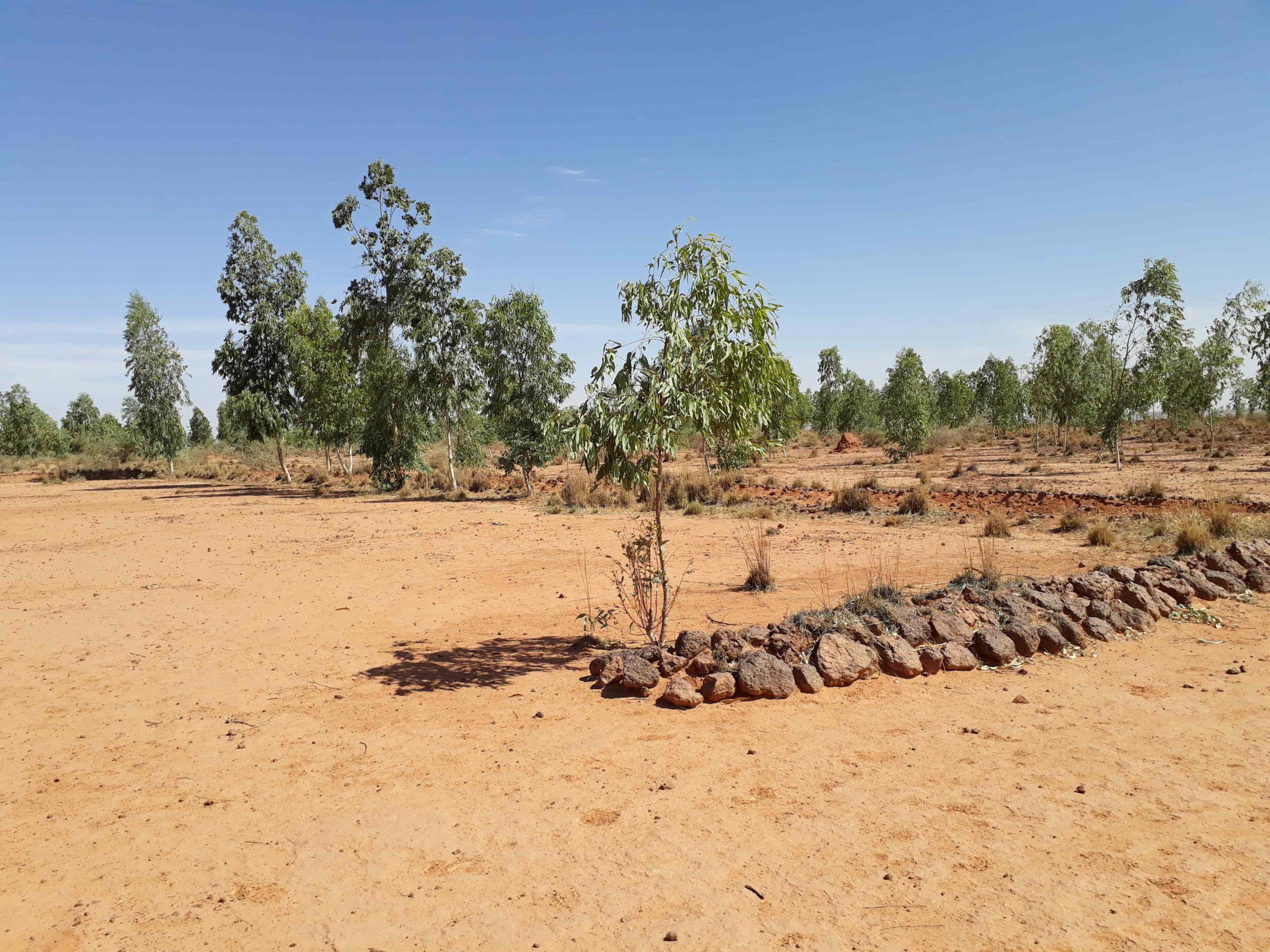 Au Niger, on récupère les terres dégradées